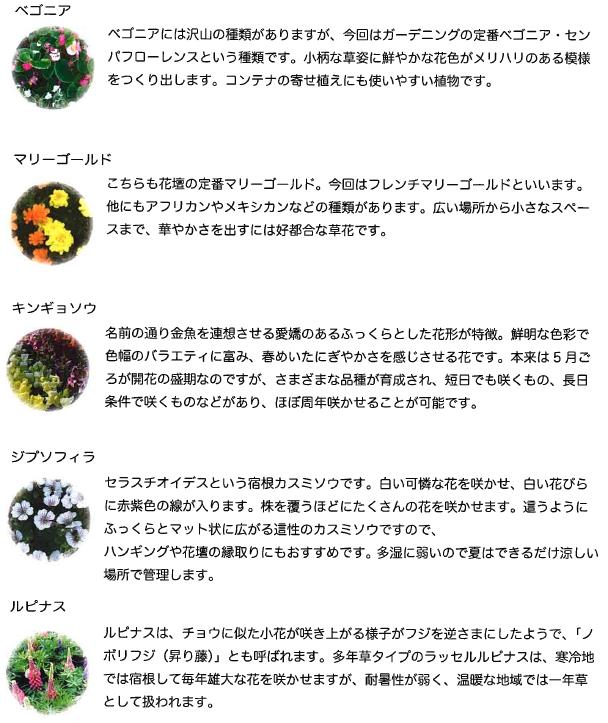 20170415-flower.jpg
